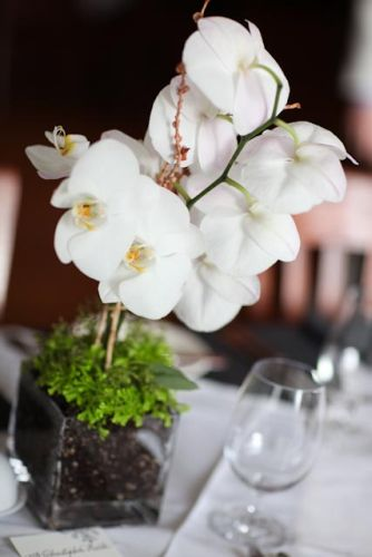 phaelonopsis orchids and clubmoss in square vase, Viewpoint Inn, Françoise Weeks