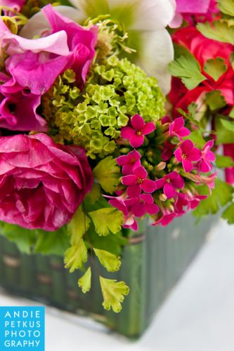 kalanchoe, roses, maidenhair at the base of nerine topiary, Françoise Weeks