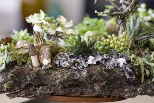 woodland arrangement on barrk with dogwood, texture, mushrooms, Françoise Weeks