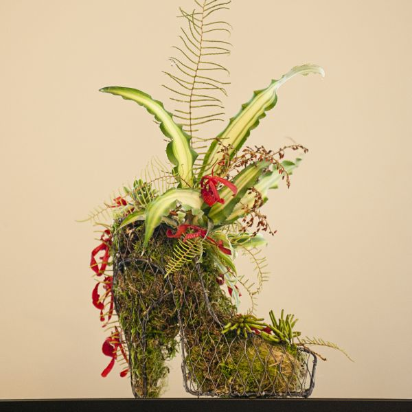 wire shoe with orchids, succulenrs, ferns, eucalyptus berries, Françoise Weeks
