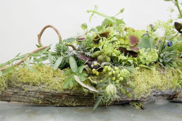 woodland arrangement on bark, Françoise Weeks