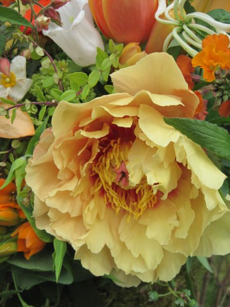 yellow peonies in archway decorations, McMinnemins Edgefield, Françoise Weeks