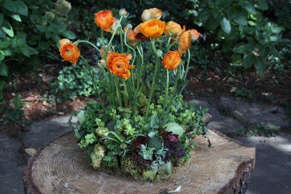 orange ranunculus and texture with hops, 2 Françoise Weeks