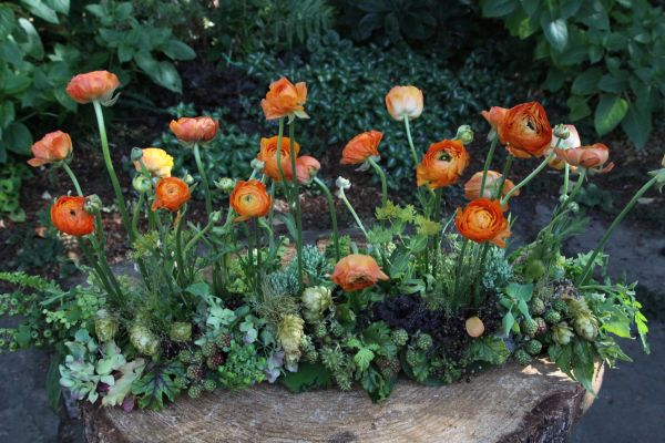 orange ranunculus and texture with hops, Françoise Weeks