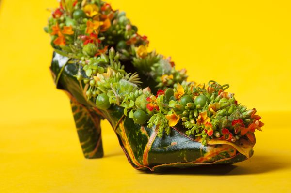 botanical shoe with croton leaves and kalanchoe, Françoise Weeks