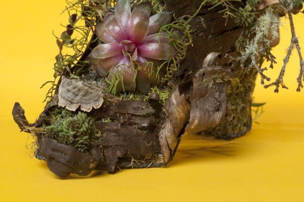 wire boot with bark and succulents 2, Françoise Weeks