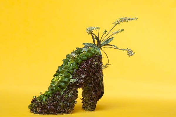 wire shoe with succulents, Françoise Weeks