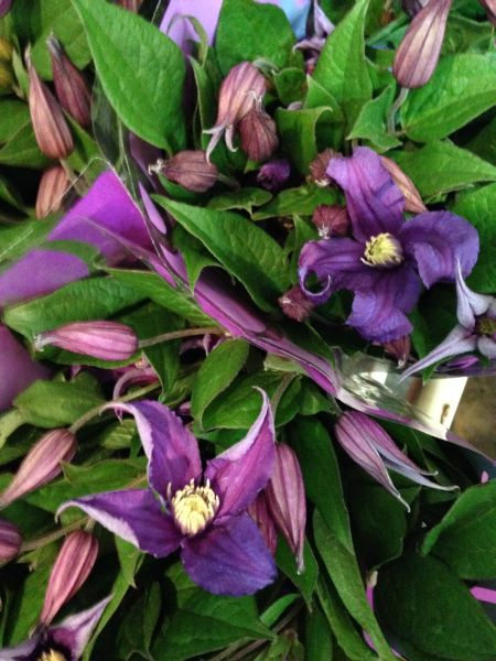 clematis, flower market in NYC, Francoise Weeks