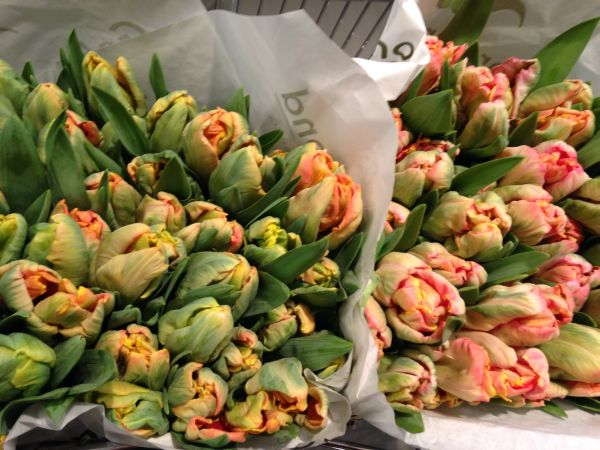 parrot tulips, flower market in NYC, Francoise Weeks