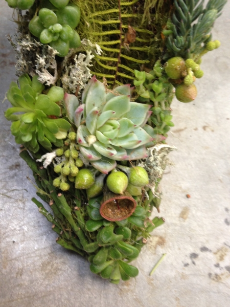 wire shoe with succulents 3, Francoise Weeks