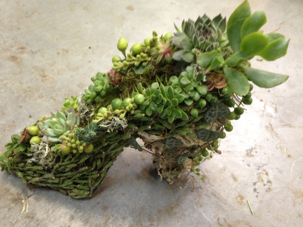 wire shoe with succulents, Francoise Weeks