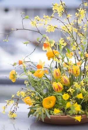 forsythia, tulips and ranunculus, Françoise Weeks