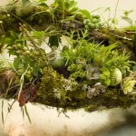 spring-log-arrangement-detail-2-Francoise