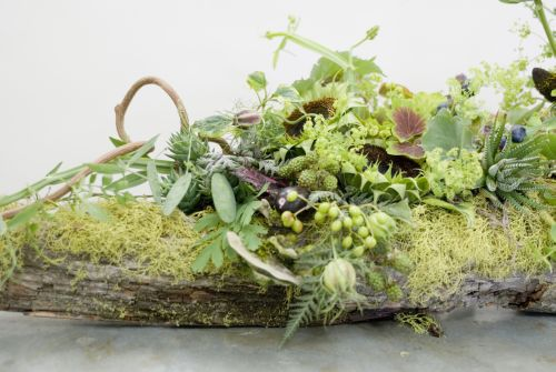 log arrangement with succulents, seedpods, kiwi branch, sunflower seedpods, text